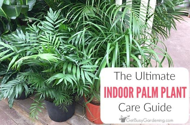 Indoor Plants Dying