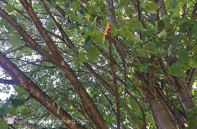 Tree Branch Sealer