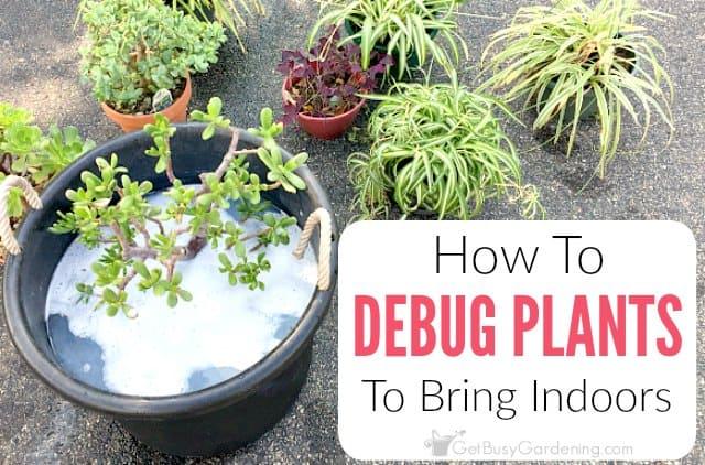 how to debug plants
