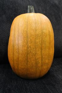 Pumpkin, tall pumpkin, orange