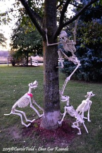 Halloween Skeleton Decorations