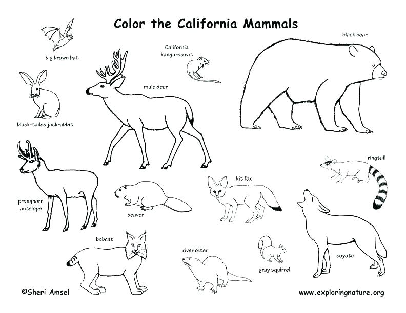 Amazon Rainforest Coloring Pages at GetColorings.com