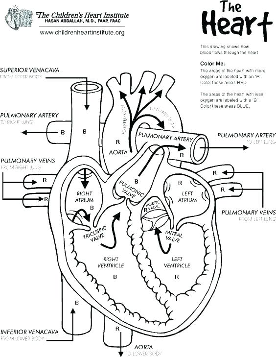Anatomy And Physiology Coloring Pages Free at GetColorings