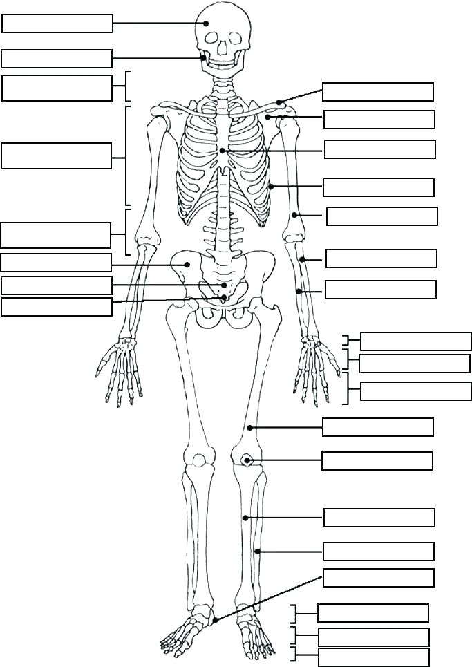 anatomy coloring pages muscles at getcolorings  free