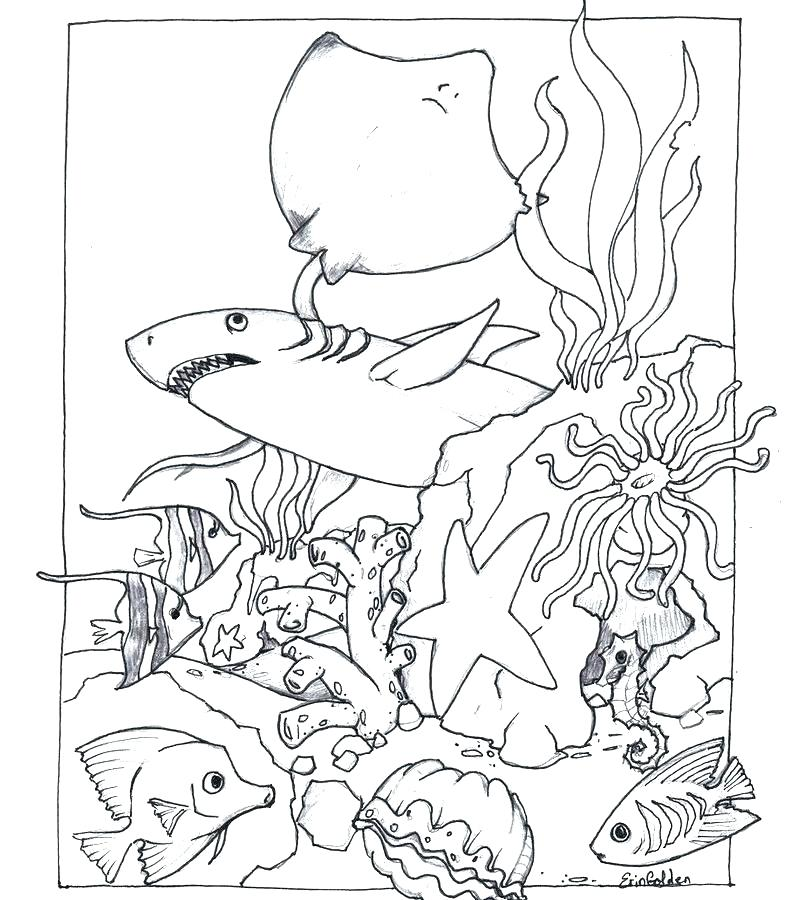 Ocean Habitat Coloring Pages Sea Animals For Kids Grig3org