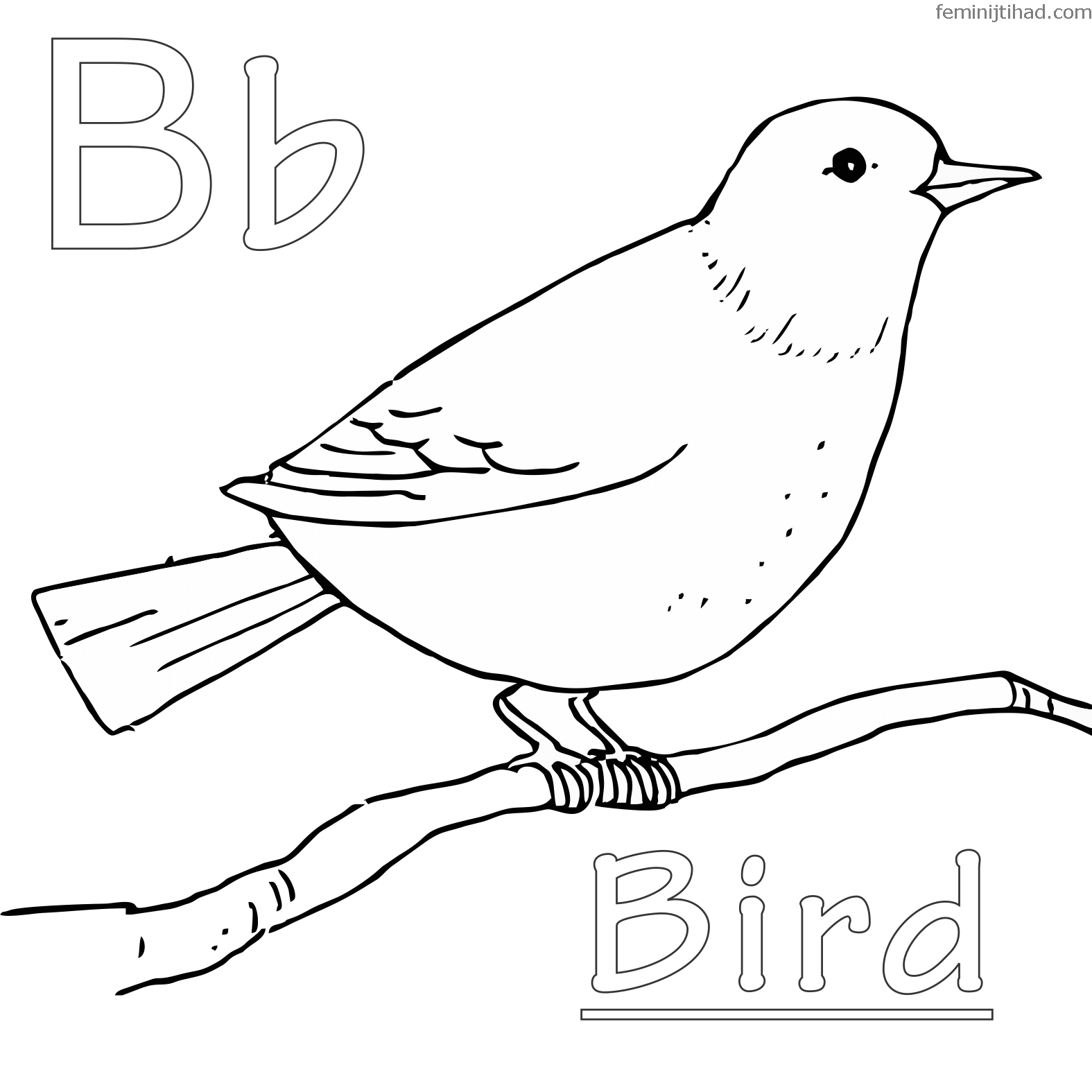 Backyard Coloring Pages At Getcolorings