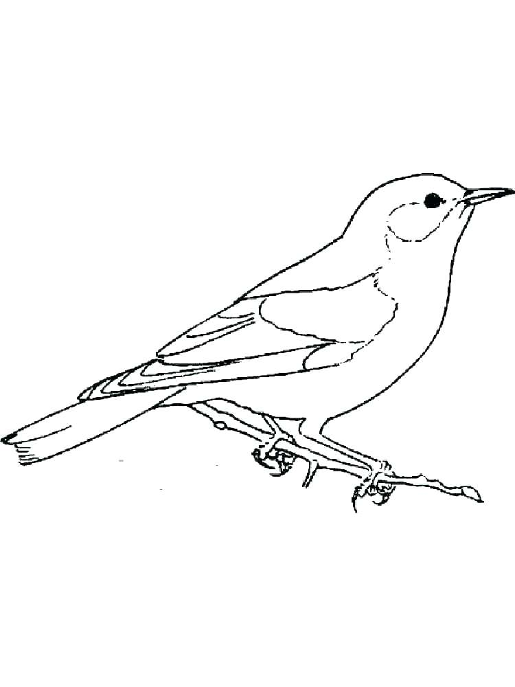 blue bird coloring pages at getcolorings  free