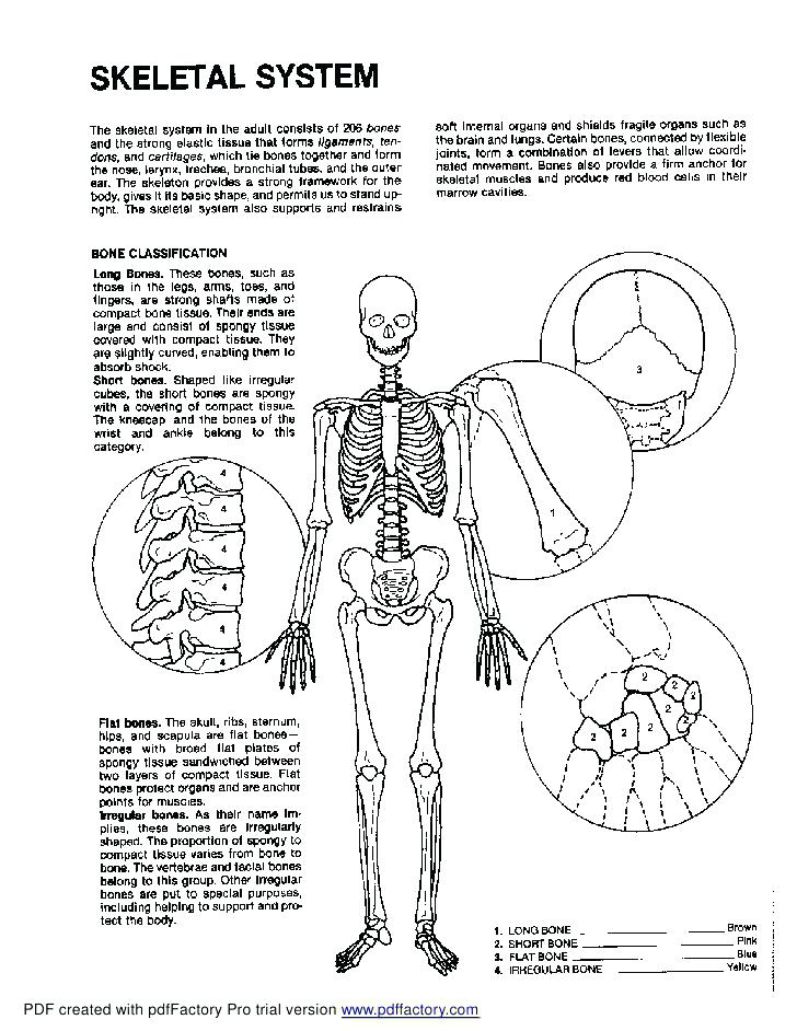 Anatomy And Physiology Coloring Pages at GetColorings.com