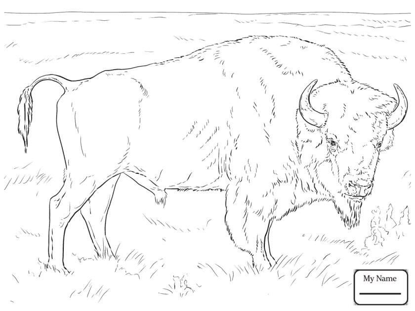 buffalo coloring pages for kids at getcolorings  free