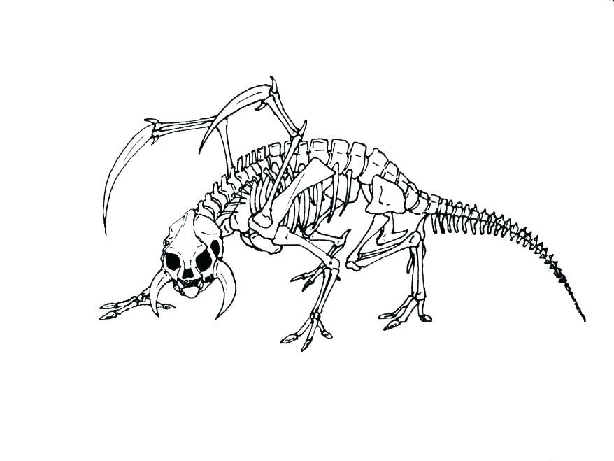 Dinosaur Skeleton Coloring Pages at GetColorings.com