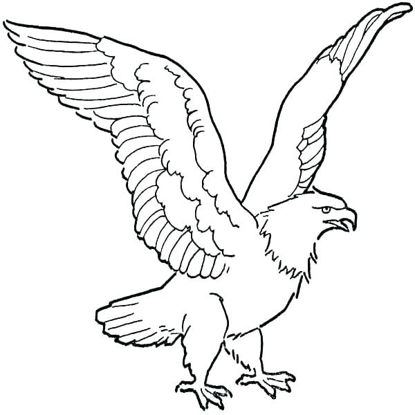 eagles football coloring pages at getcolorings  free
