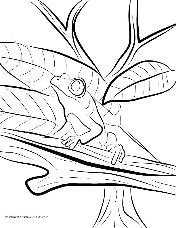 Endangered Animals Coloring Pages at GetColorings.com