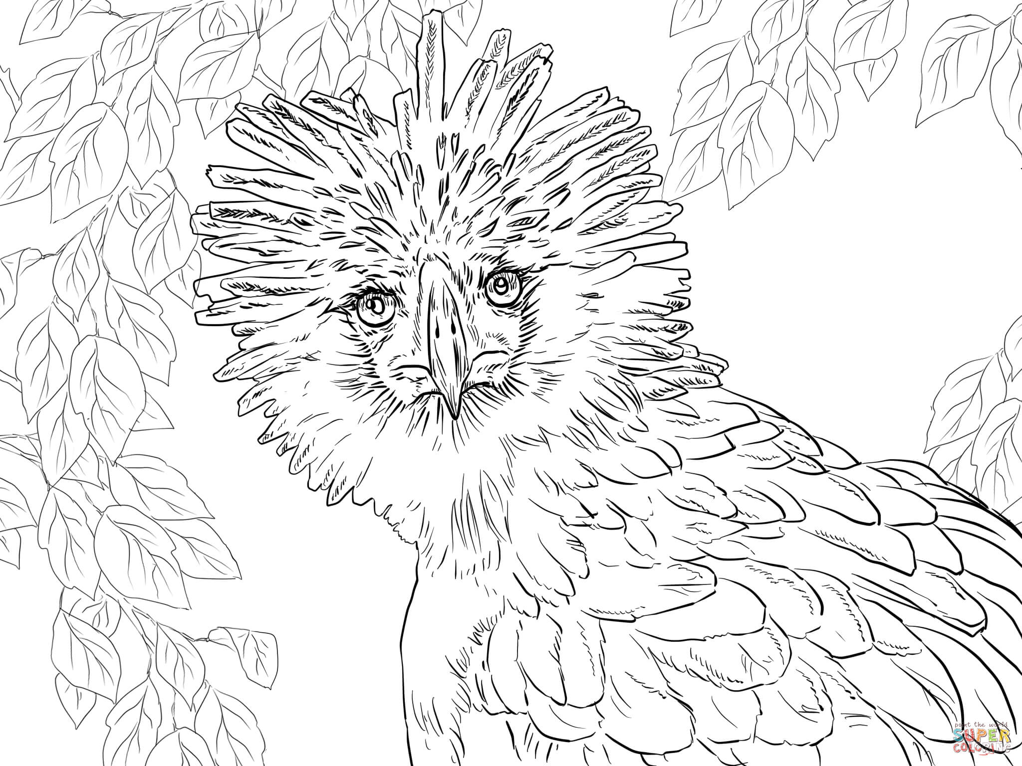 Endangered Species Coloring Pages At Getcolorings