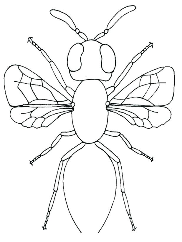 firefly coloring page at getcolorings  free printable