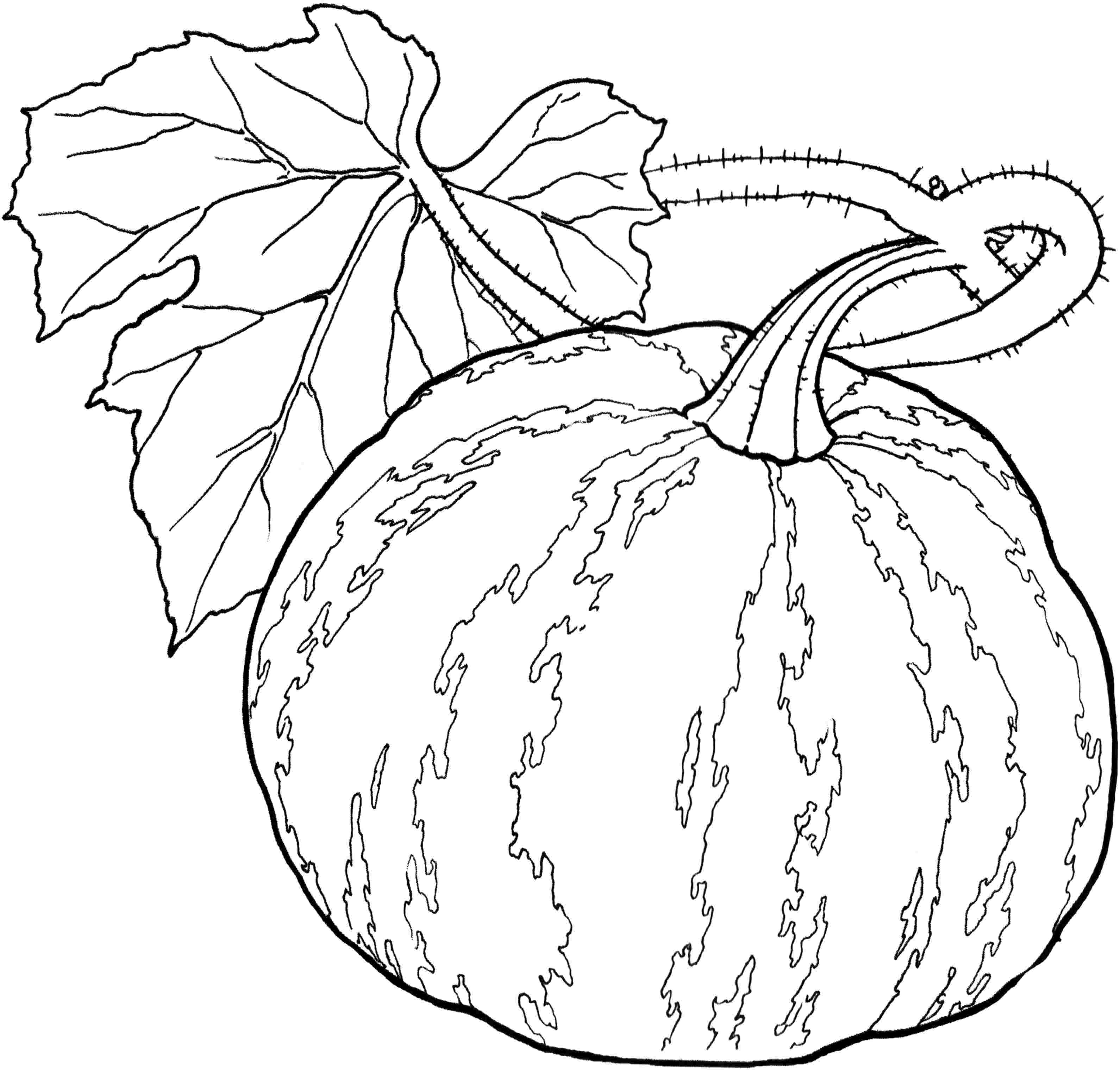 Gourd Coloring Pages At Getcolorings