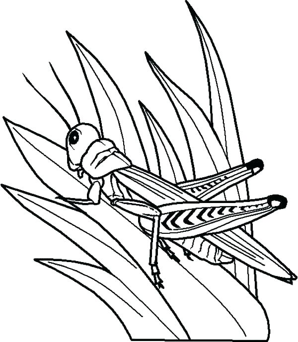 grass coloring page at getcolorings  free printable