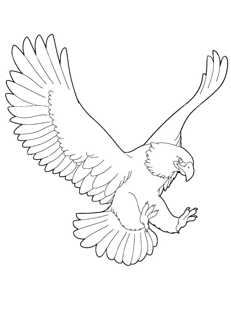 Eagle Coloring Page Baby Eagle Coloring Pages Harpy Eagle