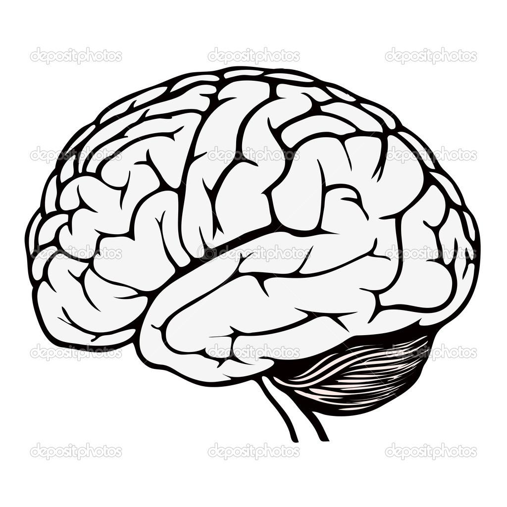 Human Brain Coloring Page At Getcolorings