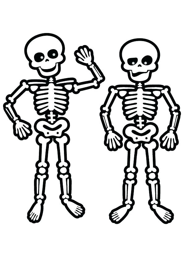 human skeleton coloring pages at getcolorings  free