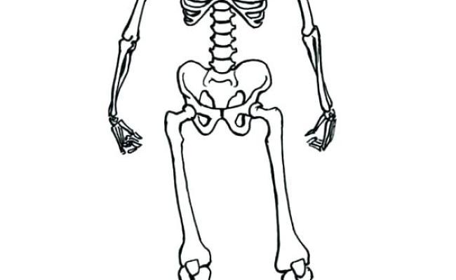 Human Skeletal System Worksheet Coloring Page Free Dokter Andalan