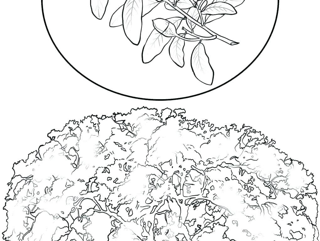 Japanese Cherry Blossom Coloring Pages at GetColorings.com