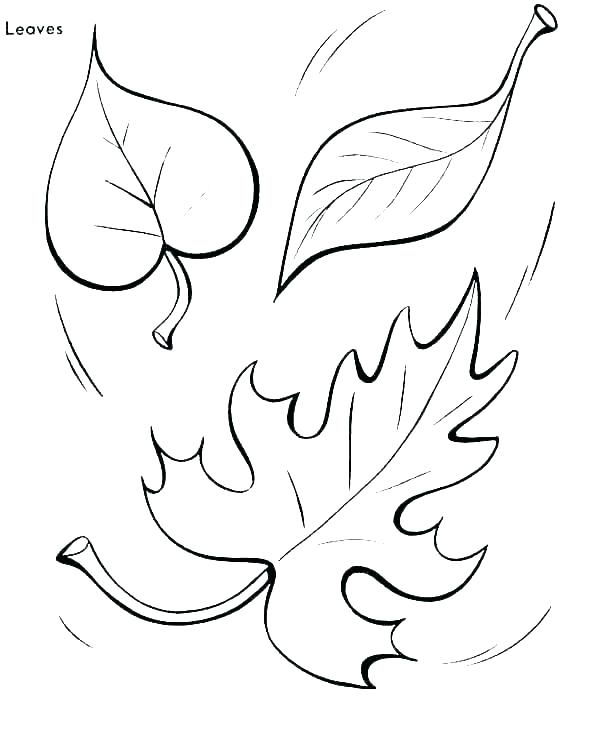 Leaf Coloring Pages For Preschool at GetColorings.com