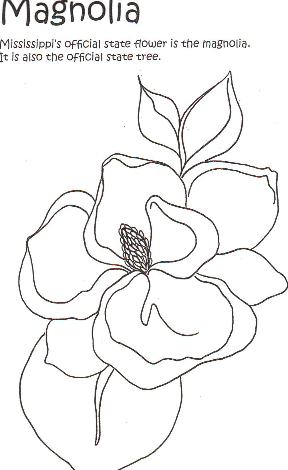 Magnolia Coloring Page at GetColorings Free