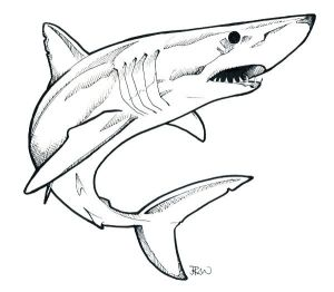 shark mako coloring pages printable getcolorings