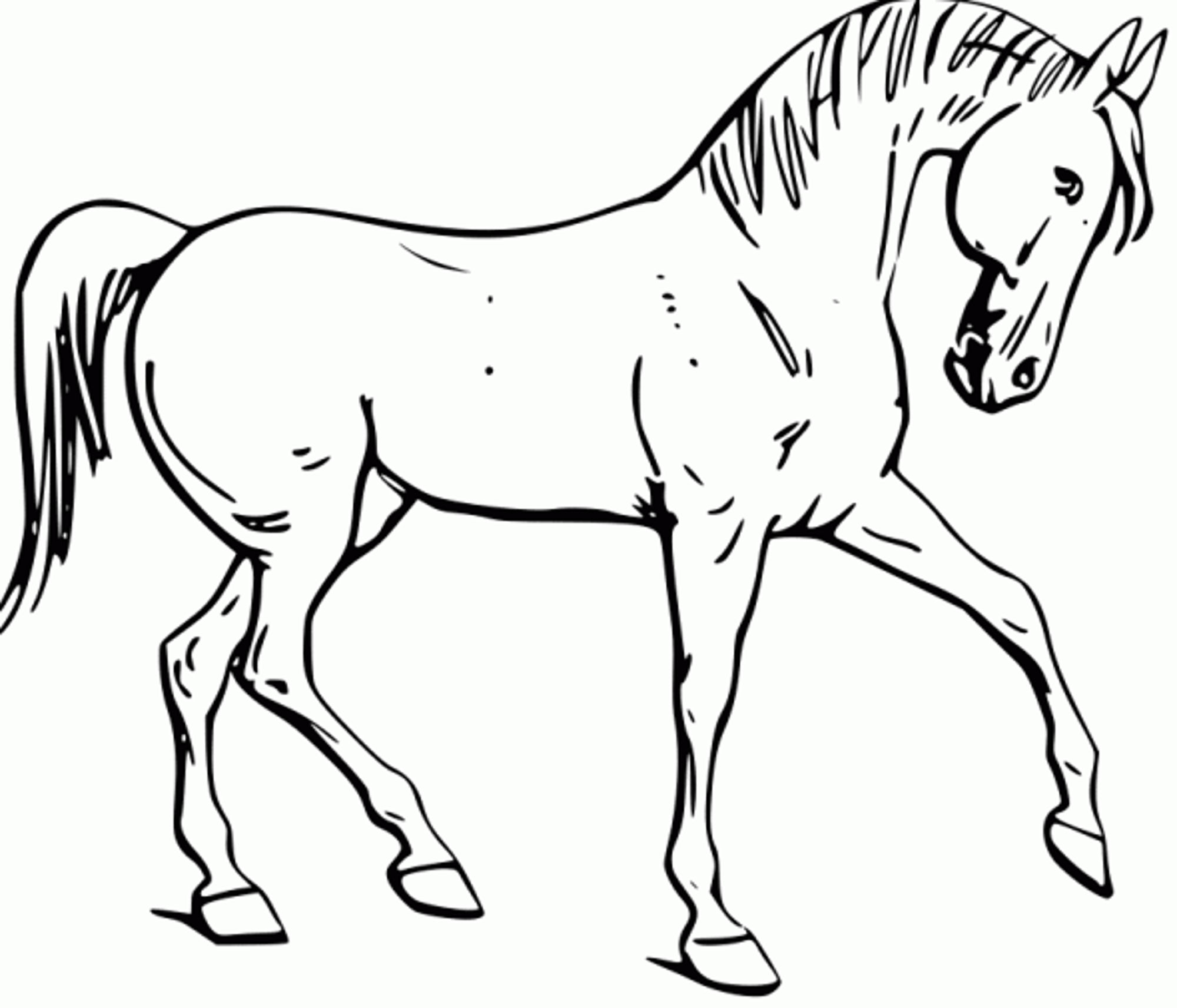 Mustang Horse Coloring Pages Printable At Getcolorings