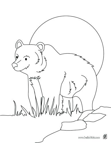 Nocturnal Animals Coloring Pages at GetColorings.com