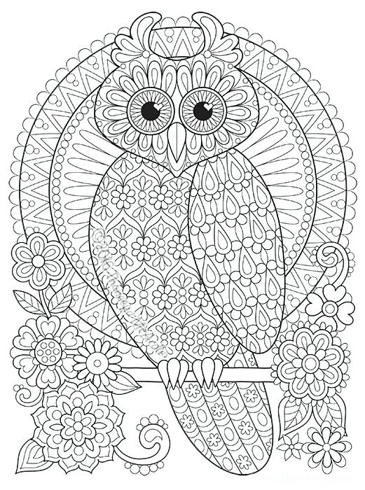 Printable Owl Coloring Pages For Adults Www.robertdee.org