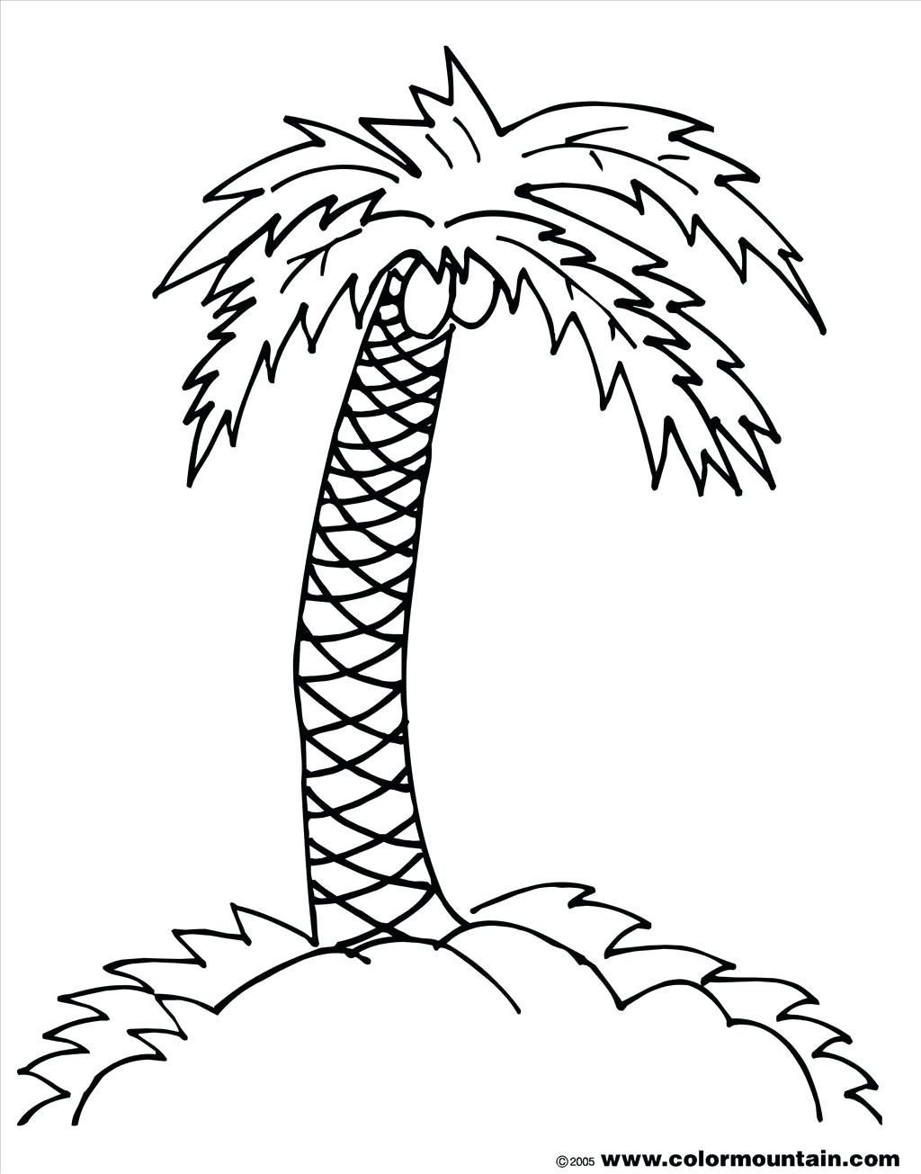 Palm Tree Leaves Coloring Pages At Getcolorings