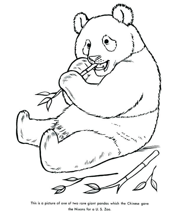 Panda Coloring Pages Printable at GetColorings Free