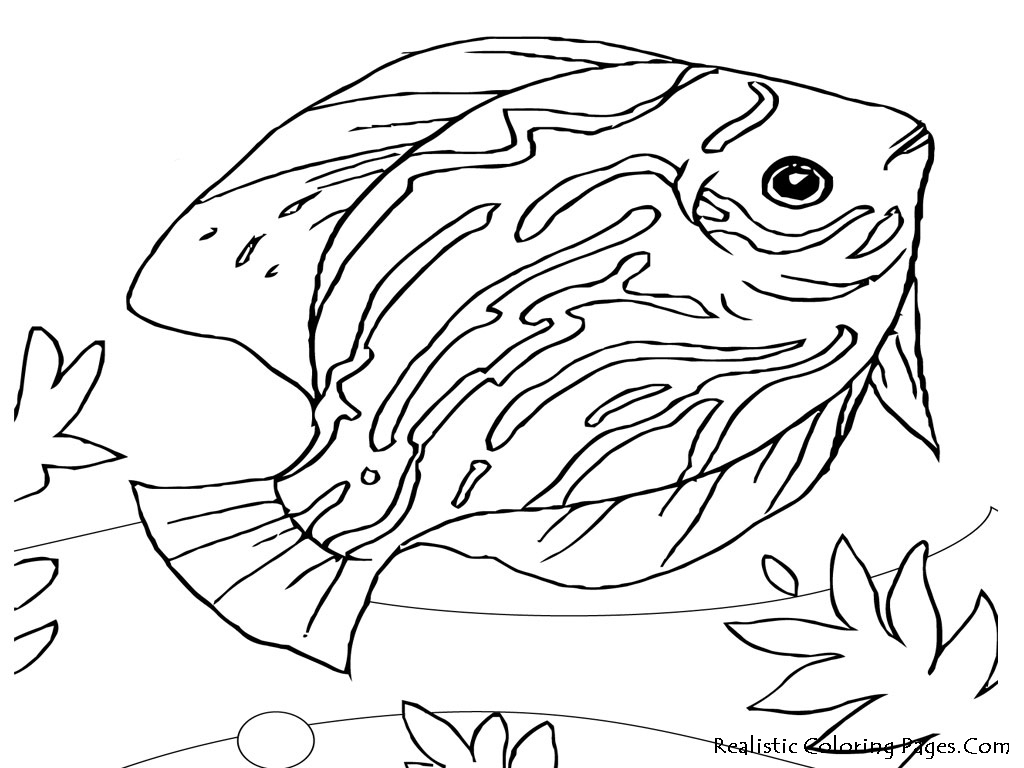 Printable Realistic Animal Coloring Pages At Getcolorings