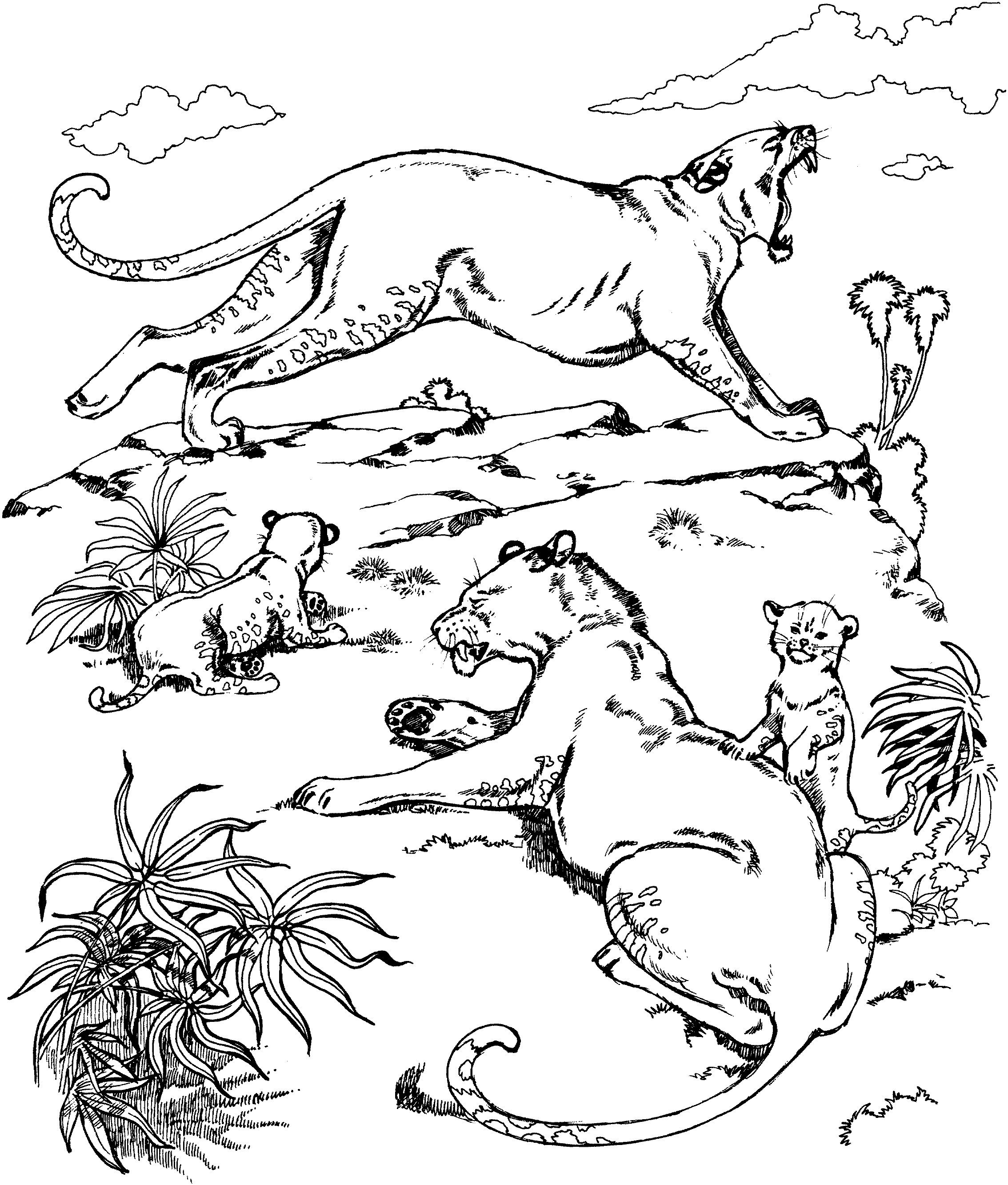 Puma Coloring Pages At Getcolorings