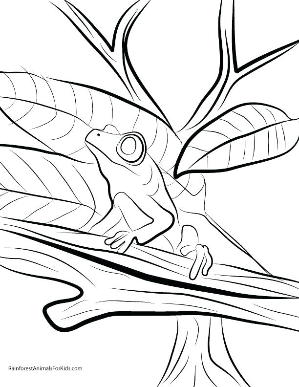 Rainforest Coloring Pages For Kids at GetColorings.com