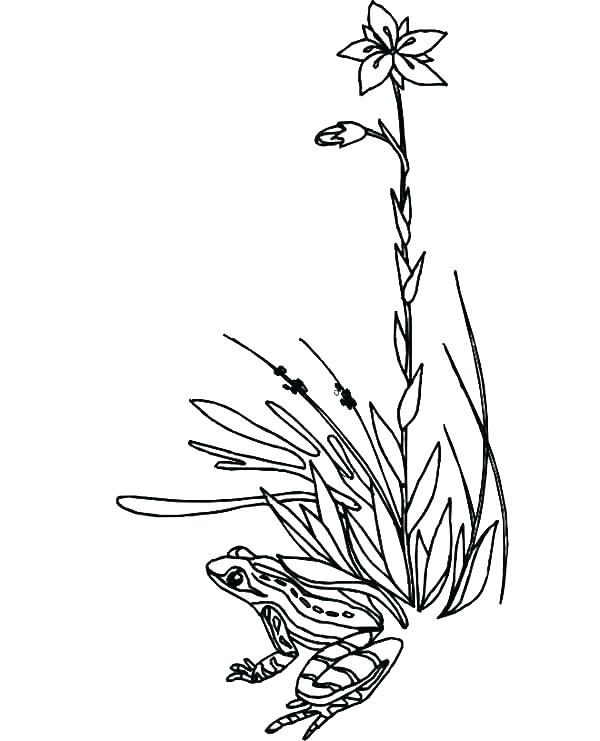 Rainforest Flowers Coloring Pages at GetColorings.com