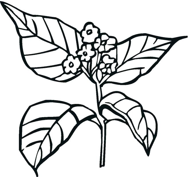 Rainforest Plants Coloring Pages at GetColorings.com