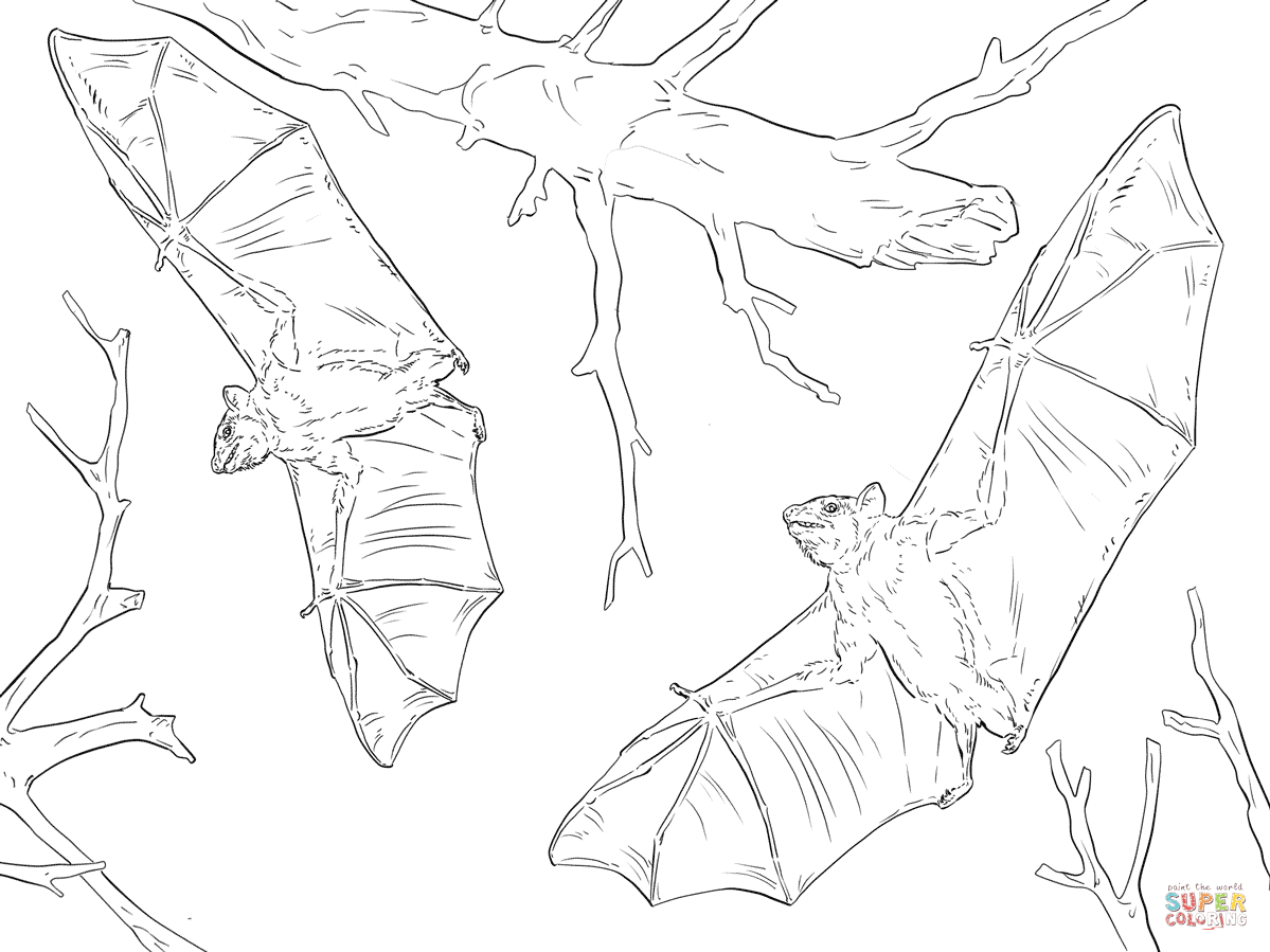 Realistic Bat Coloring Pages At Getcolorings