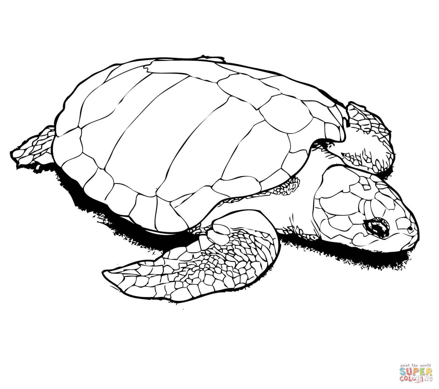 Realistic Turtle Coloring Pages At Getcolorings