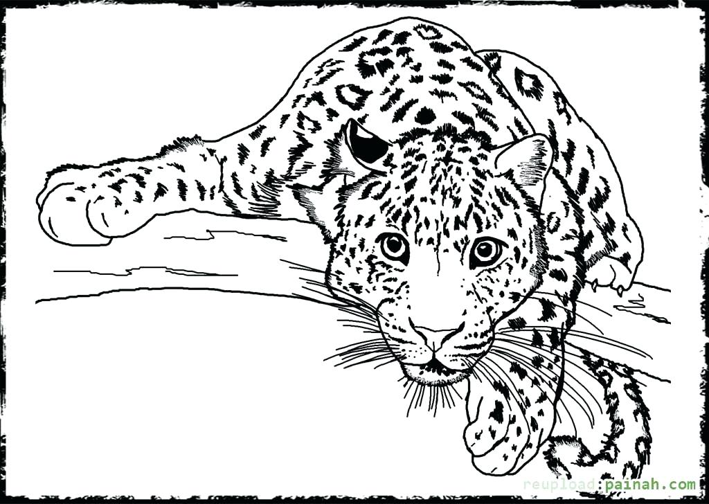 Realistic Wild Animal Coloring Pages at GetColorings.com ... | free coloring pages animals realistic
