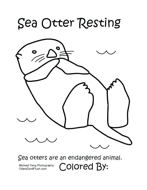 sea otter coloring page at getcolorings  free