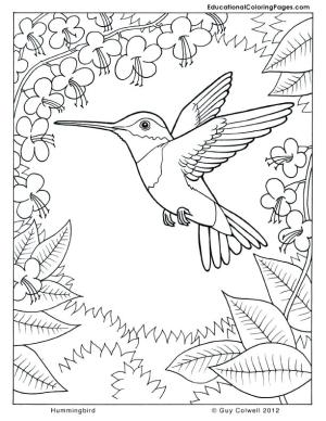 coloring pages printable spa nature colouring getcolorings