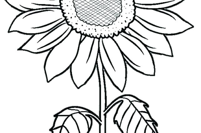 Sunflower Coloring Pages For Adults at GetColorings.com