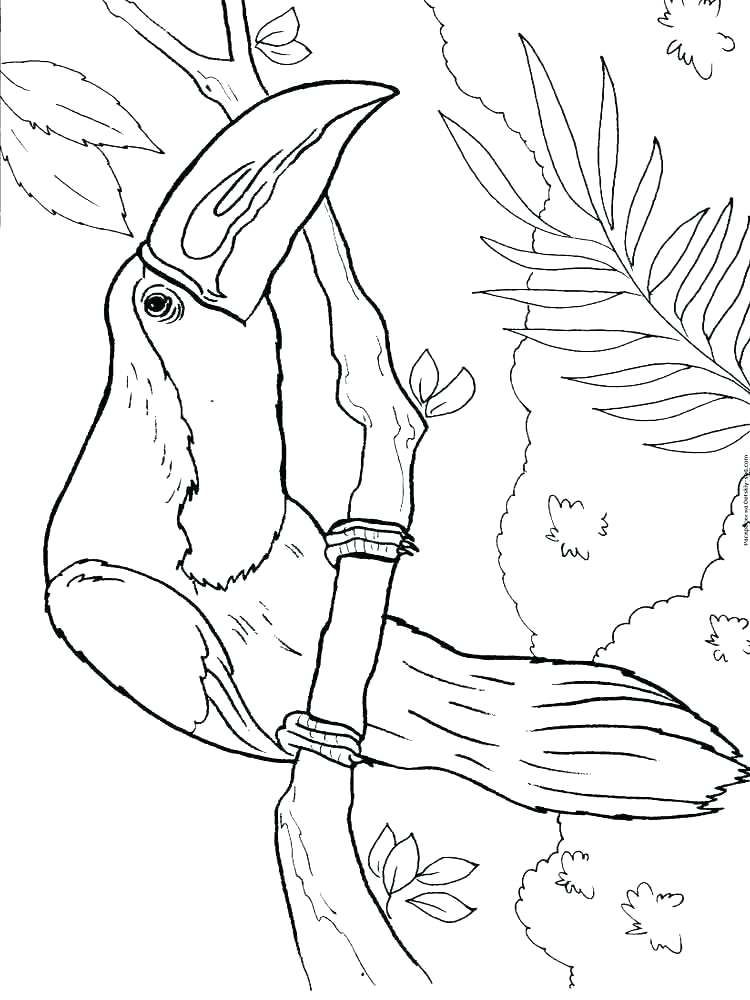 toucan bird coloring pages at getcolorings  free