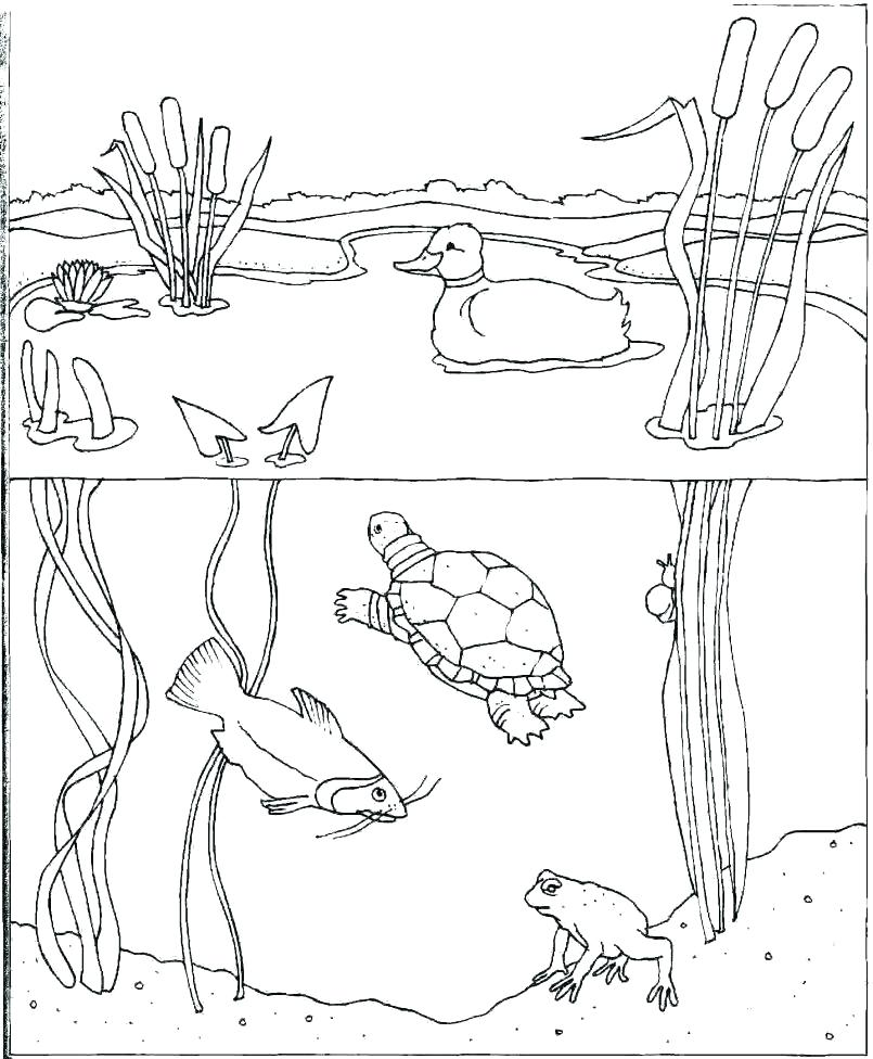 water park coloring pages at getcolorings  free