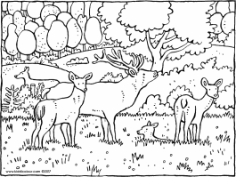 Woods Coloring Pages at GetColorings.com   Free printable ...