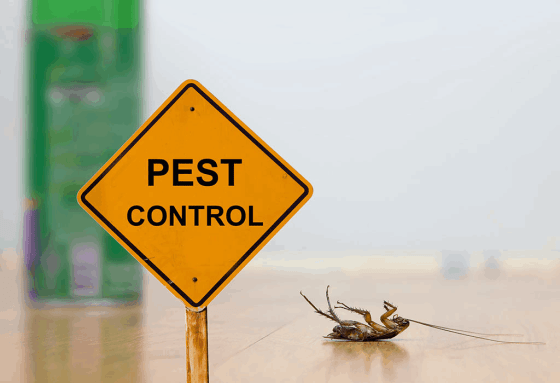 10 Chemical-Free Ways to Remove Household Pests
