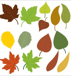 1917x1920 autumn leaves clipart [ 1917 x 1920 Pixel ]