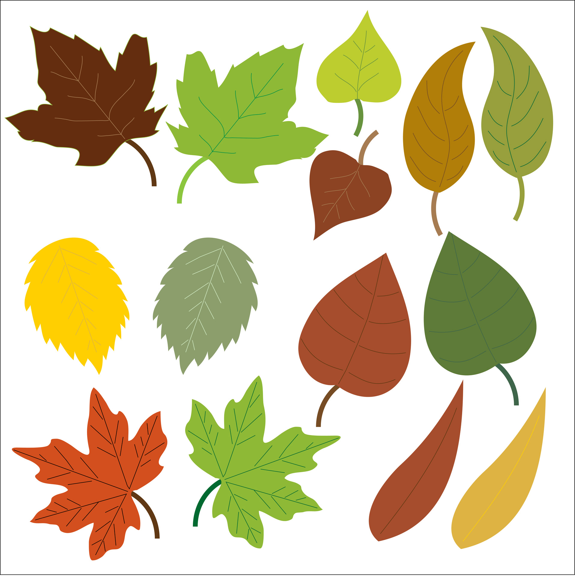 hight resolution of 1917x1920 autumn leaves clipart